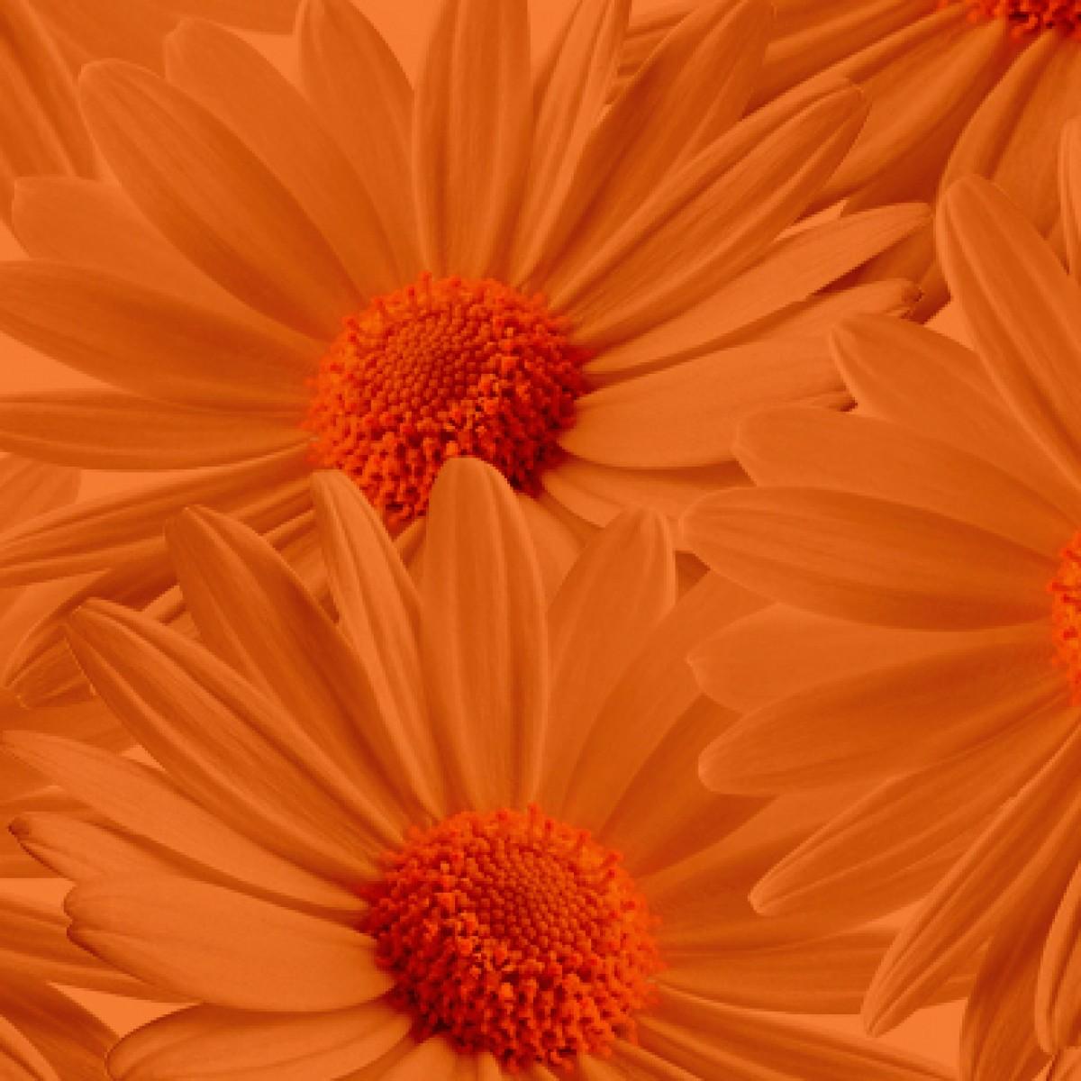 75 Orange Absorbit Dye - 1 No