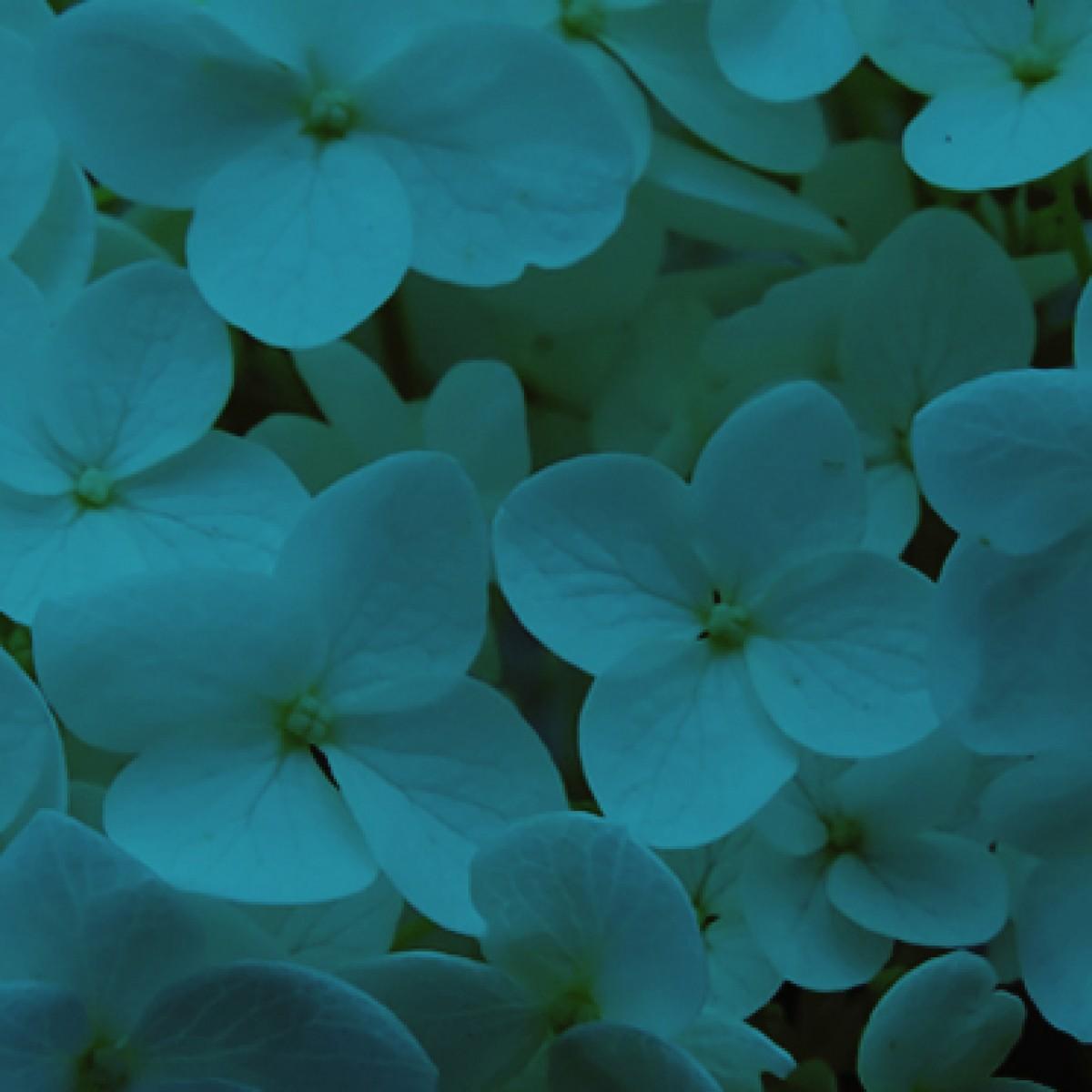 42 Teal Blue Absorbit Dye - 1 No