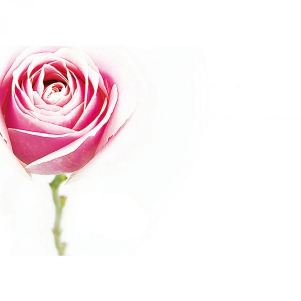 4509 Rose Pink 9x6cm 50x1 Cards